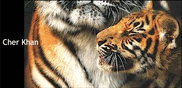 tigre titre